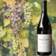 Pinot Noir Wines by Main Street Social restaurant in Libertyville